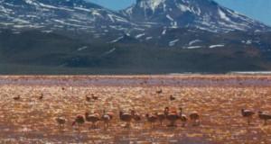 По дорогам Боливии