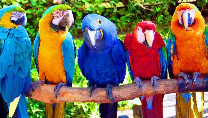 фестиваль попугая