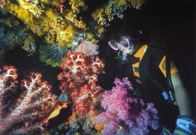 Рай для дайверов - Большой Барьерный Риф, Австралия