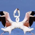 Галапагосские острова: птицы, животные и невероятная красота