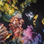 Рай для дайверов — Большой Барьерный Риф, Австралия